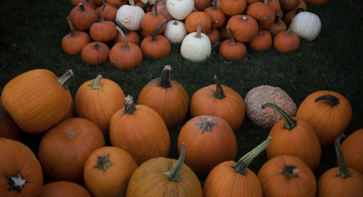 Celebrate Halloween with pumpkin carving templates, ghost stories, and happy hauntings from across campus.