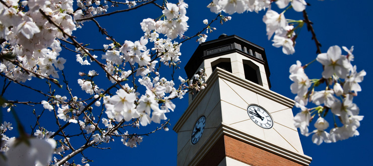 Guthrie bell tower with cherry blossoms