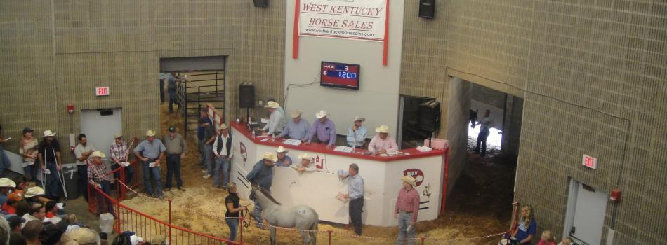 West KY Horse Sales