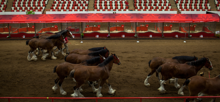 The Budweiser Clydesdales are in Bowling Green this week and will be on campus prior to the WKU vs. Bowling Green opening Hilltopper football game this Friday at 5 pm, sponsored by JB Distributors.