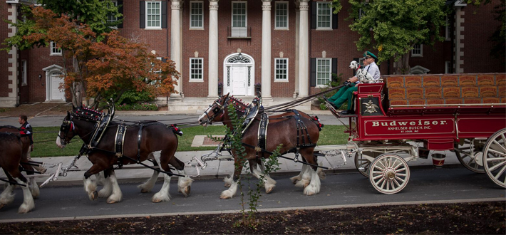 JB Distributors brought the Budweiser Clydesdales to WKU before the WKU vs. MTSU on Saturday (10-10).