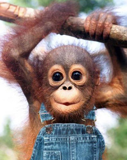 Hilarious Monkey