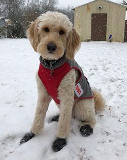 Laika Dog