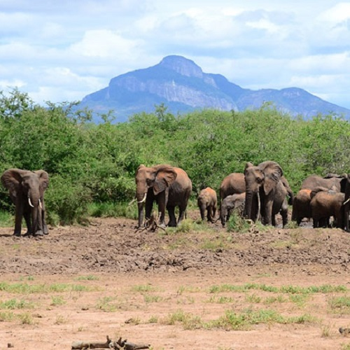 Grant supports WKU research on human-elephant conflict in agricultural region of Kenya