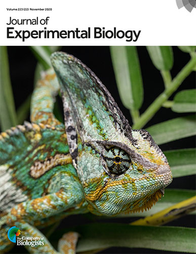 WKU research, photo featured on cover of biology journal