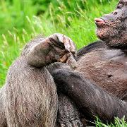 A monkey relaxing in the sun