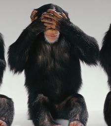 Speak no monkey, see no monkey, hear no monkey poses