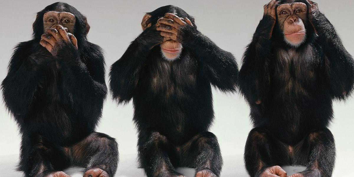 Three chimps posing