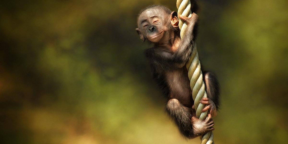 A monkey swinging from a rope