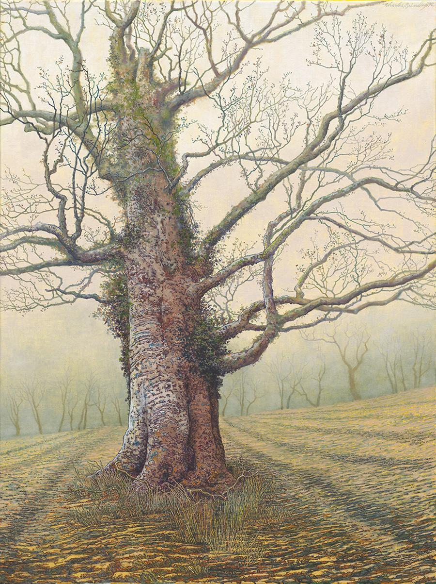 Old Beech Tree in North Pasture, 2013