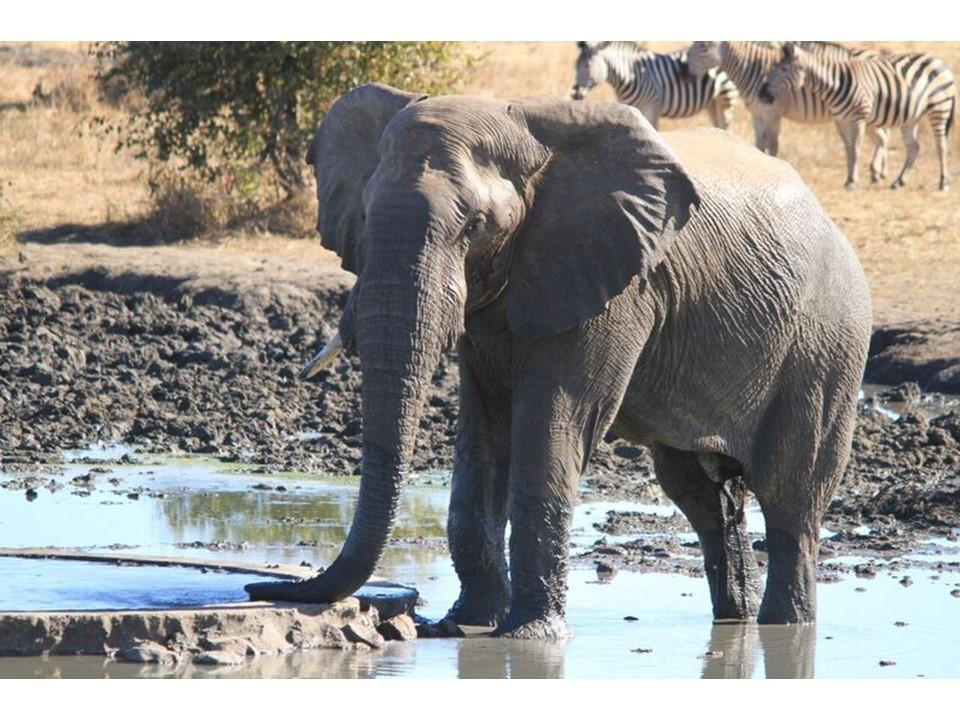 "Elephant at ""watering hole"""