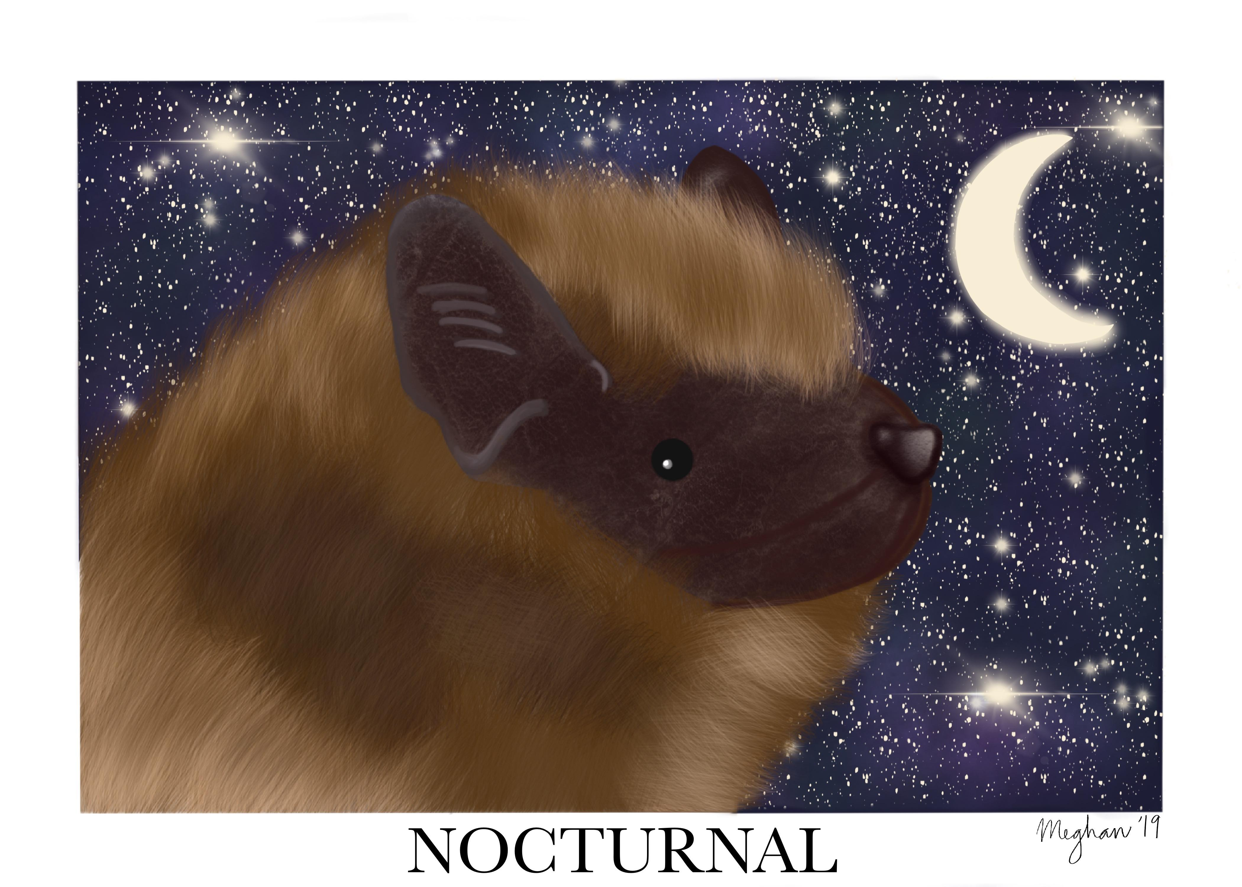 """I chose to portray how the Big Brown Bats are nocturnal. The definition of nocturnal is """"1: of, relating to, or occurring in the night, 2: active at night."""" I feel like this is important for people to know because the Big Brown Bat population is decreasing due to white nose syndrome. I also think it is important to know about bats using echolocation, which is using sound waves and echoes to know what is ahead of them; this is what helps them """"see"""" at night."""