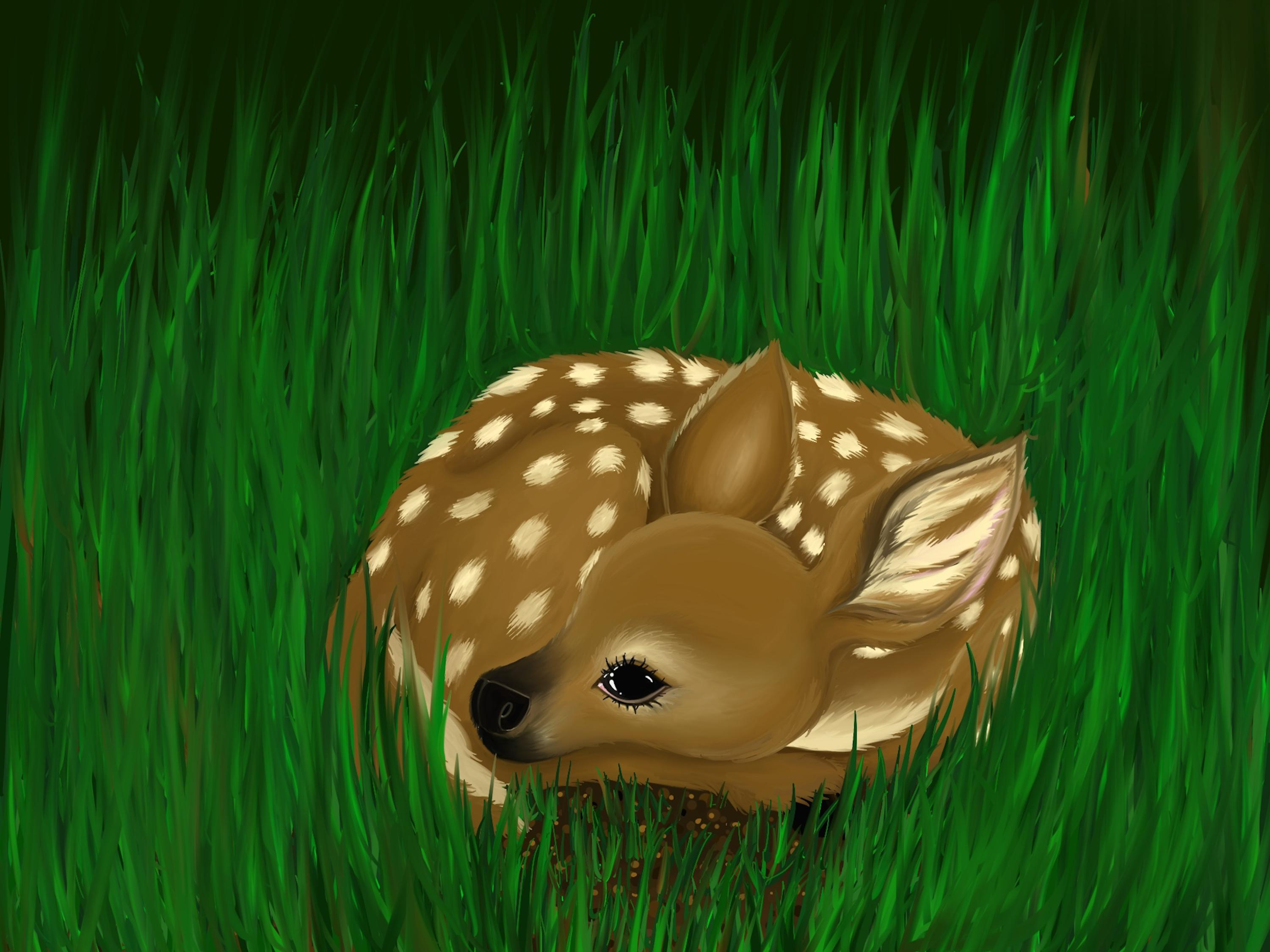 If you see a baby deer alone resting in the tall grass, leave them alone! Unless you know for a fact that the mother is dead, don't approach the fawn. Does will often leave their fawns in a safe place while they go to graze, only returning a few times a day and a night to nurse her fawn. This prevents attracting a predator to her young. If the mother feels seen by a puma or a wolf, she can run fast away fast enough. However, her young, small fawn cannot. So until her offspring are strong enough to survive in the open, the fawn will remain in their safe spot, hidden from predators.