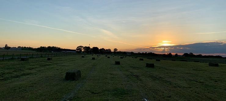 Hay Field 2020