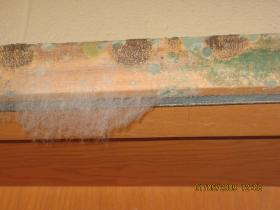 mold under baseboard