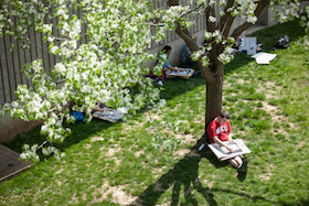 Student outside studying under a tree in bloom