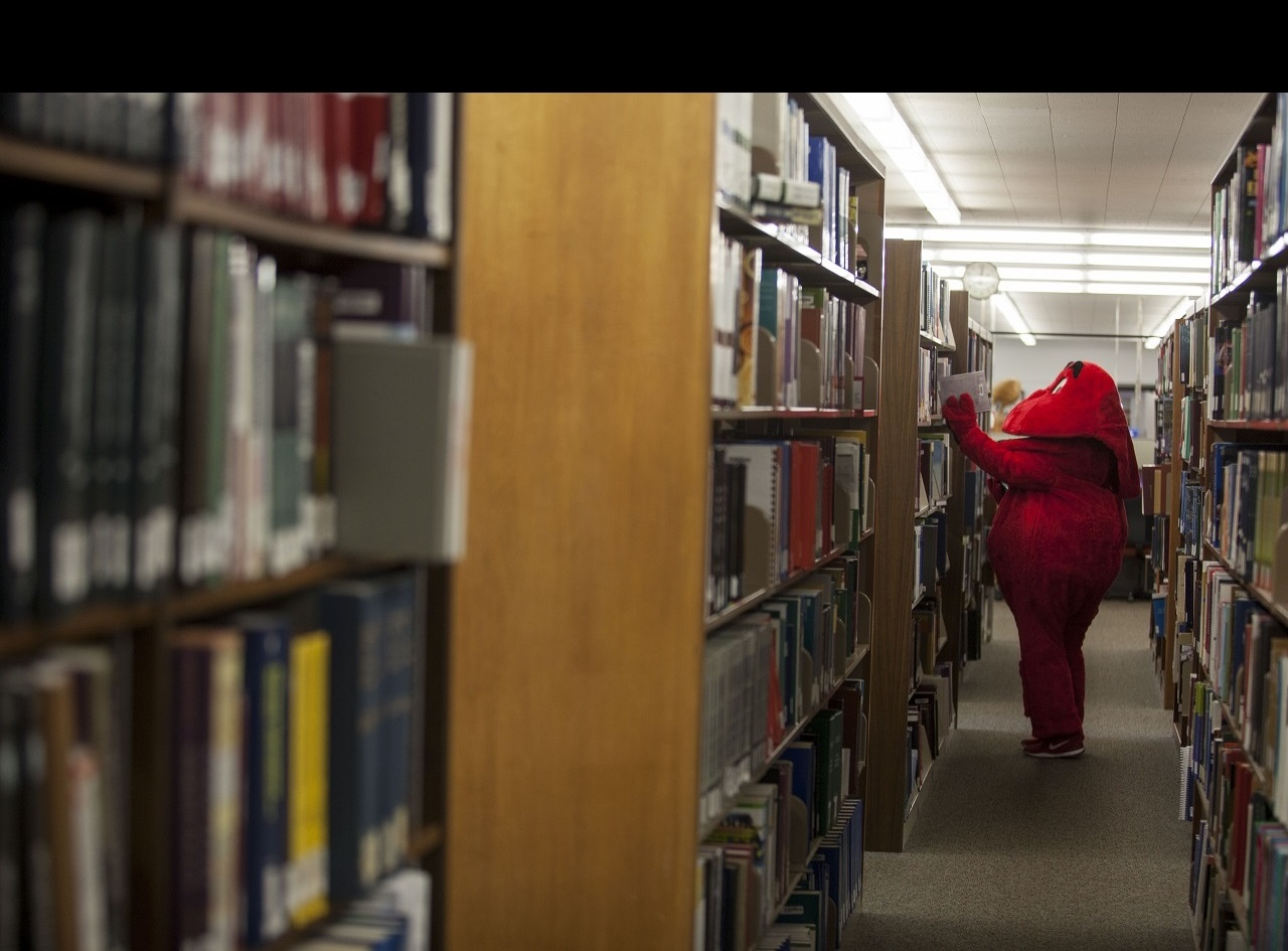 /library/_resources/images/hero-images/big-red-browsing-stacks.jpg