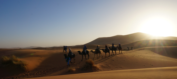 Students took a camel-trek in the Sahara on Dr. Kiasatpour's Morocco study abroad program.