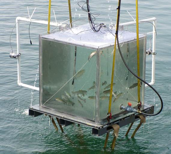 Seneca Lake trout sonar trial tank