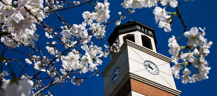 Guthrie Tower blossoms