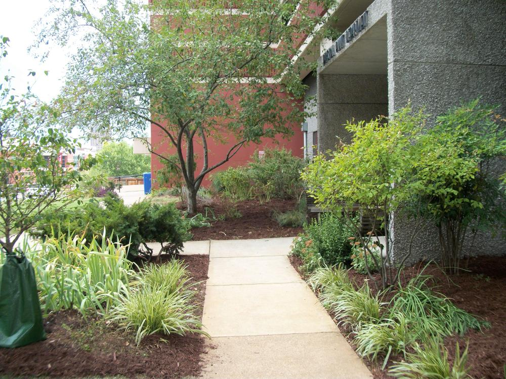 Garden at Dept. of Facilities Management