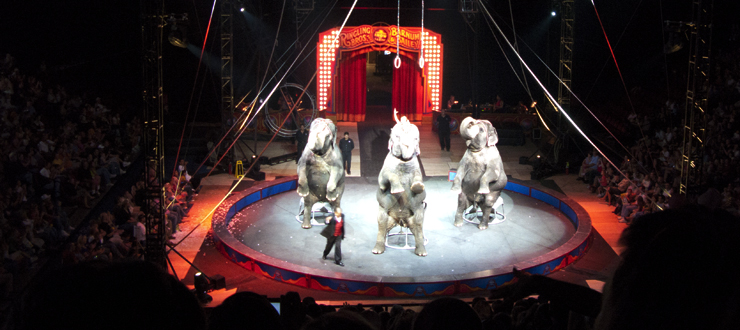 The Ringling Bros. Circus at Diddle Arena